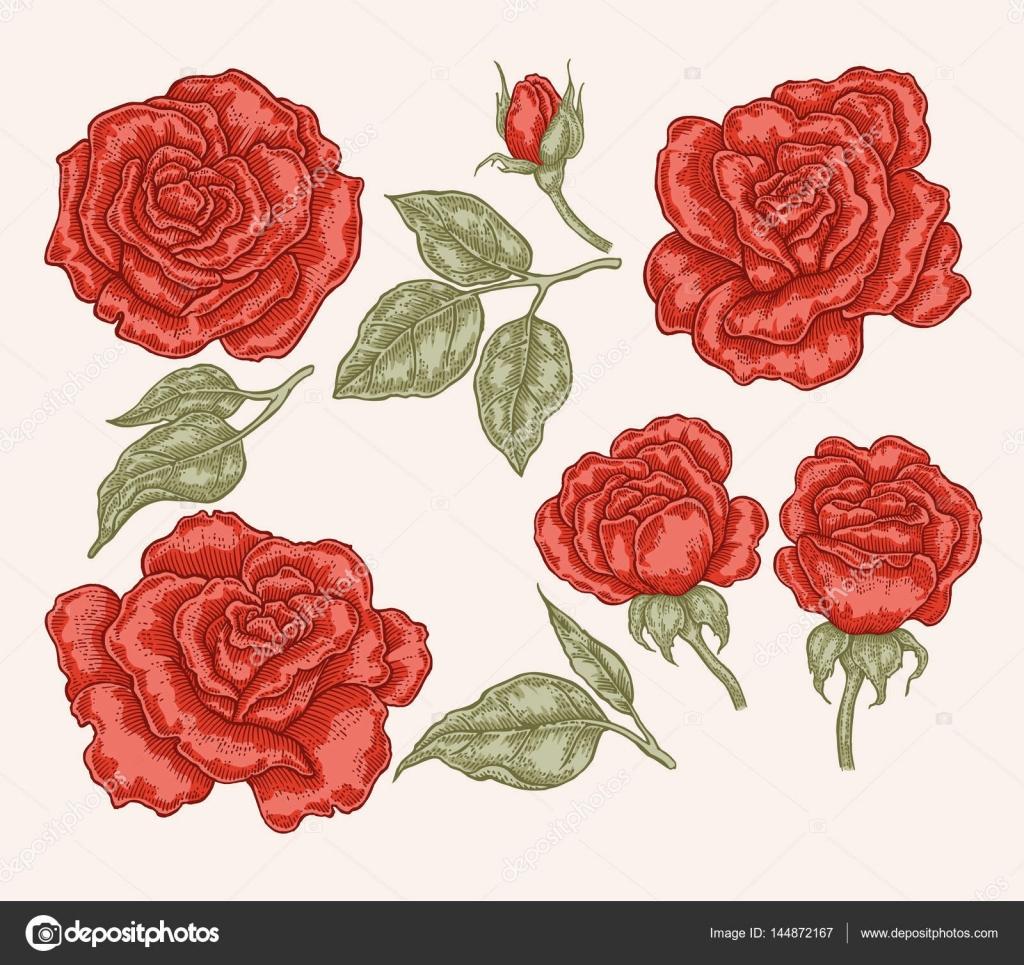 Dibujos Rosas Rojas Para Imprimir Flores Rosas Rojas Y Hojas De