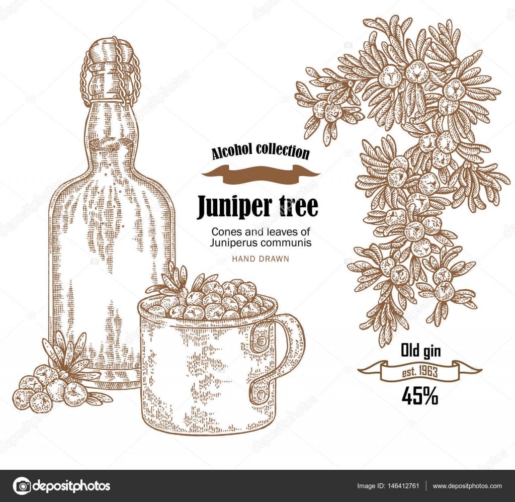 ジュニパーの木古いボトル ジン ベクトル イラストビャクシン属