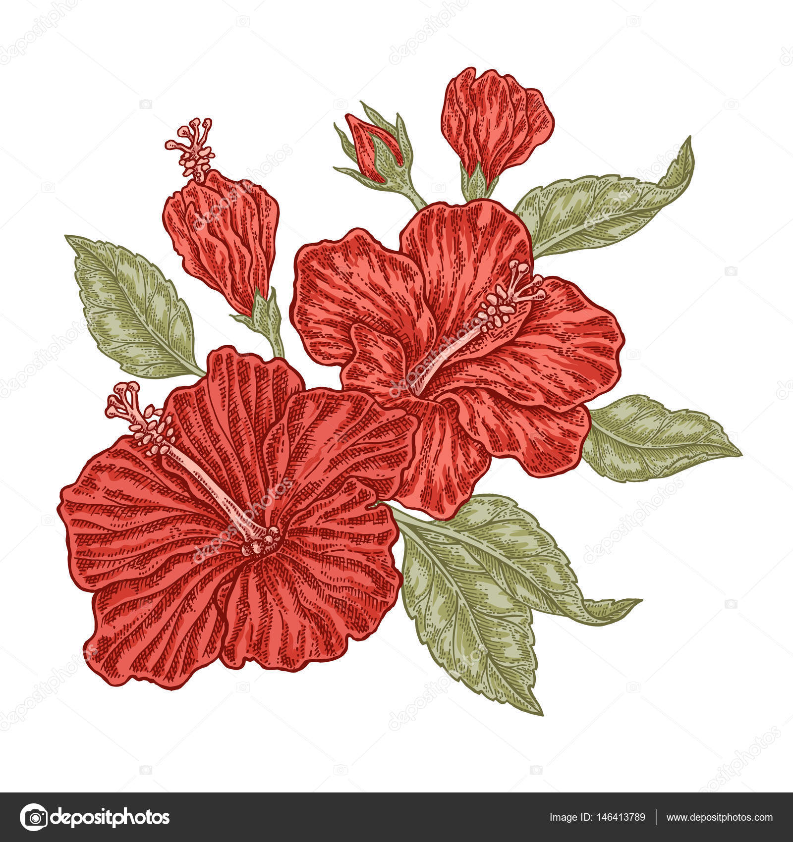 Red Hibiscus Flowers And Leaves In Vintage Style Hand Drawn