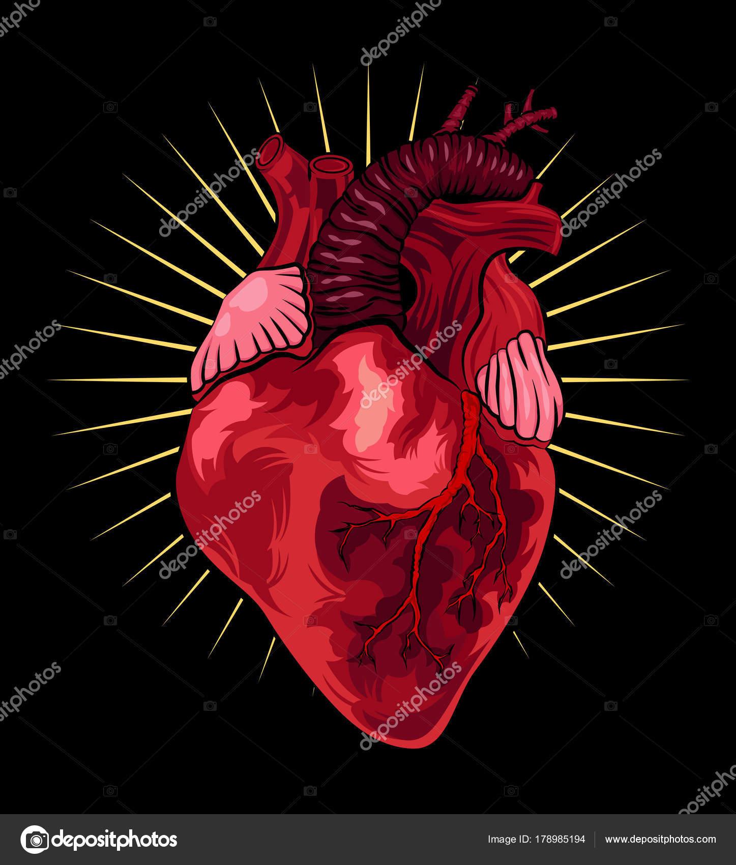 Menschlichen Herzen auf schwarzem Hintergrund. Vektor-Illustration ...