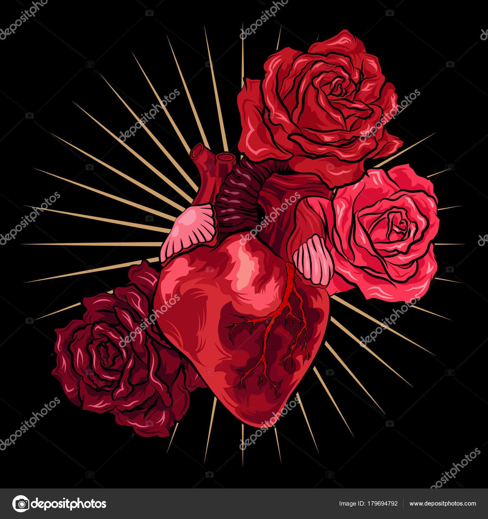 Vettore Sfondi Neri Con Rosa Cuore Umano Con Rose Rosse Su Sfondo