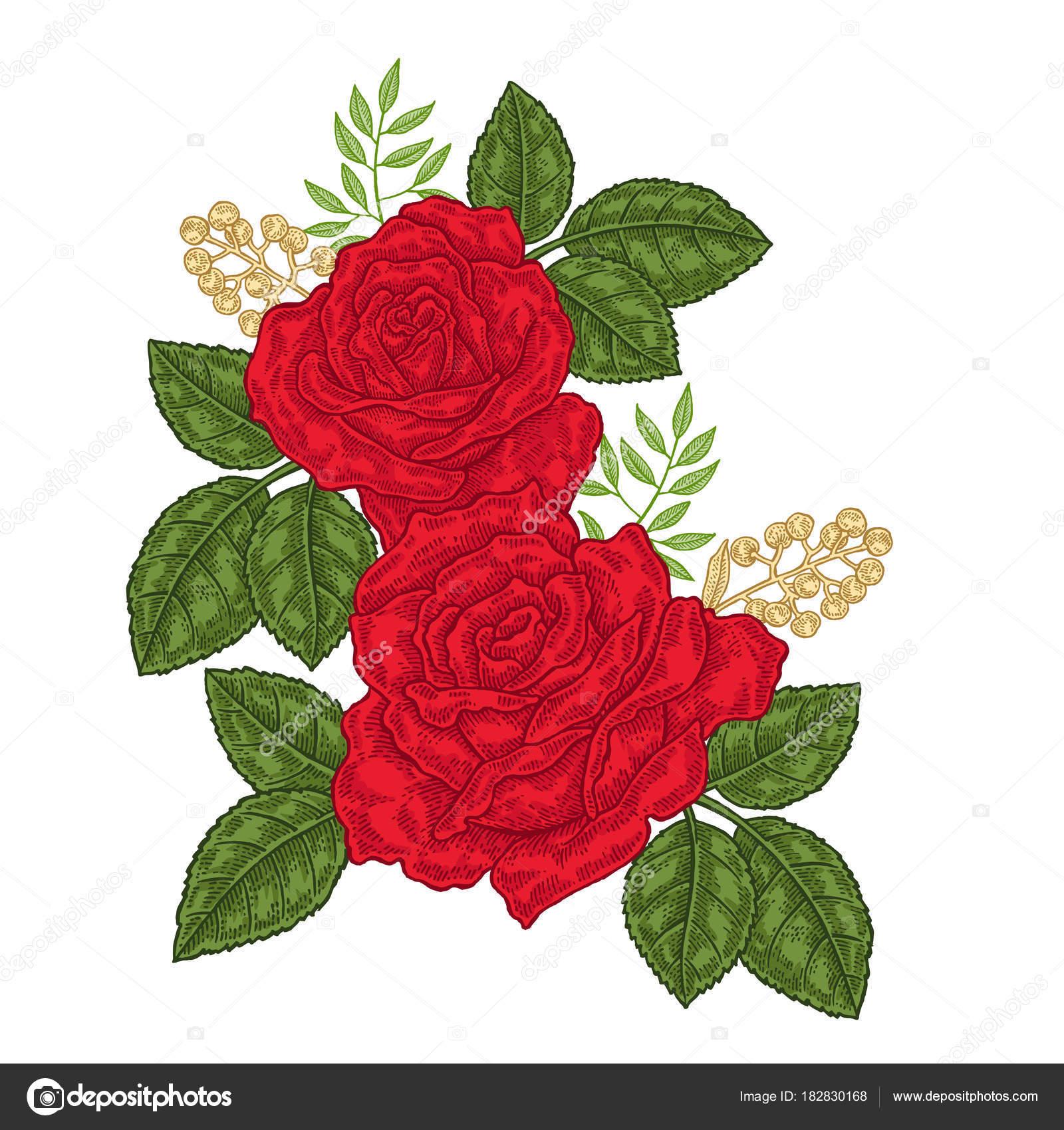 Rose Rosse Fiori E Foglie In Stile Vintage Disegnato A Mano