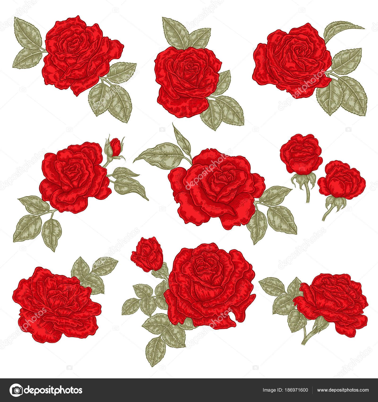 Dibujos Rosas Rojas Para Imprimir Rosas Rojas Aisladas Sobre