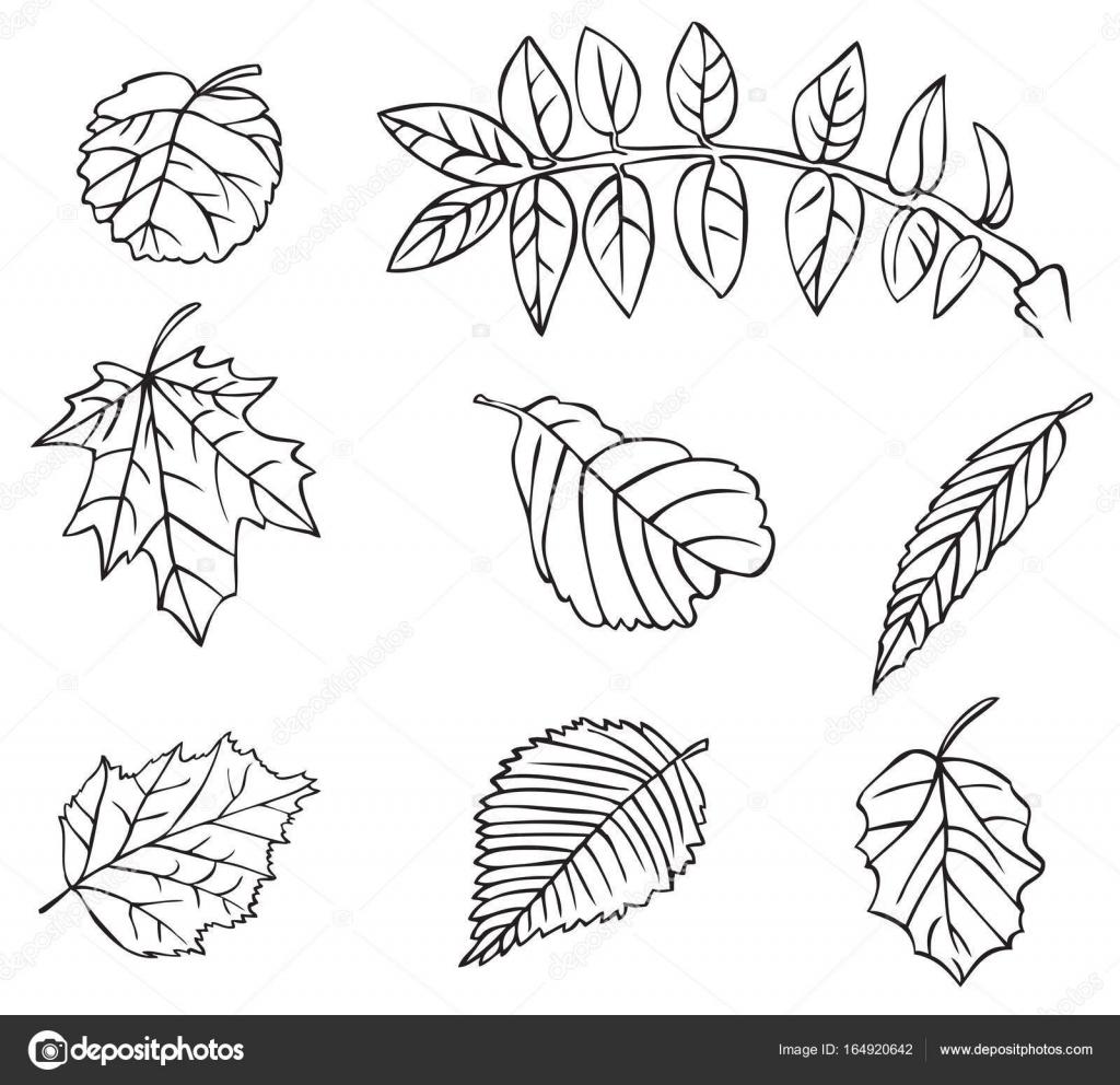 Hojas De Arboles Dibujo árbol De Hojas De Dibujo Vector De Stock