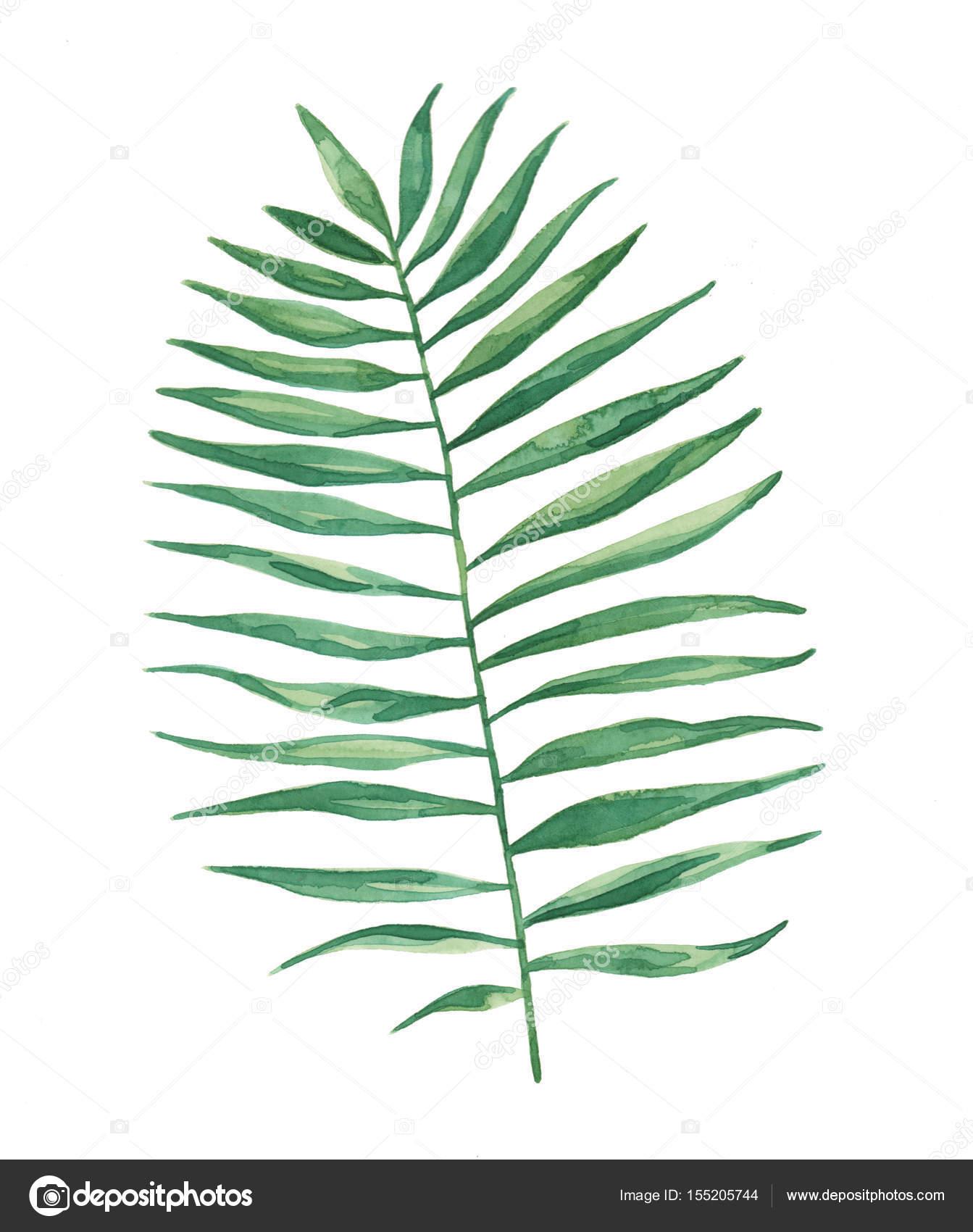 Suluboya Tropikal Palmiye Yaprak Yaprak Boyama Stok Foto