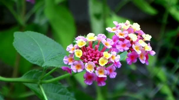 barevné květy na zeleném pozadí