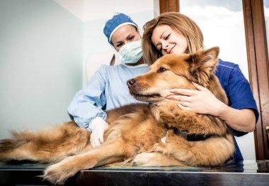 Veterinary doctor checking dog heart