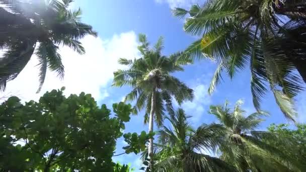 Trópusi strand, nemzeti park a Maldív-szigeteken, fizetős pálmafákkal. Nyaralás a paradicsomi szigeten Palms elszigetelt az Indiai-óceánon. Tengerpart, tenger és ég. 4k