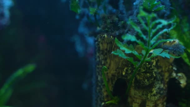 Podvodní barevné Ryby v akváriu s mnoha rostlinami a kyslíkové bubliny 4k