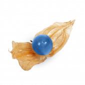 Blue physalis fruit isolated on white background