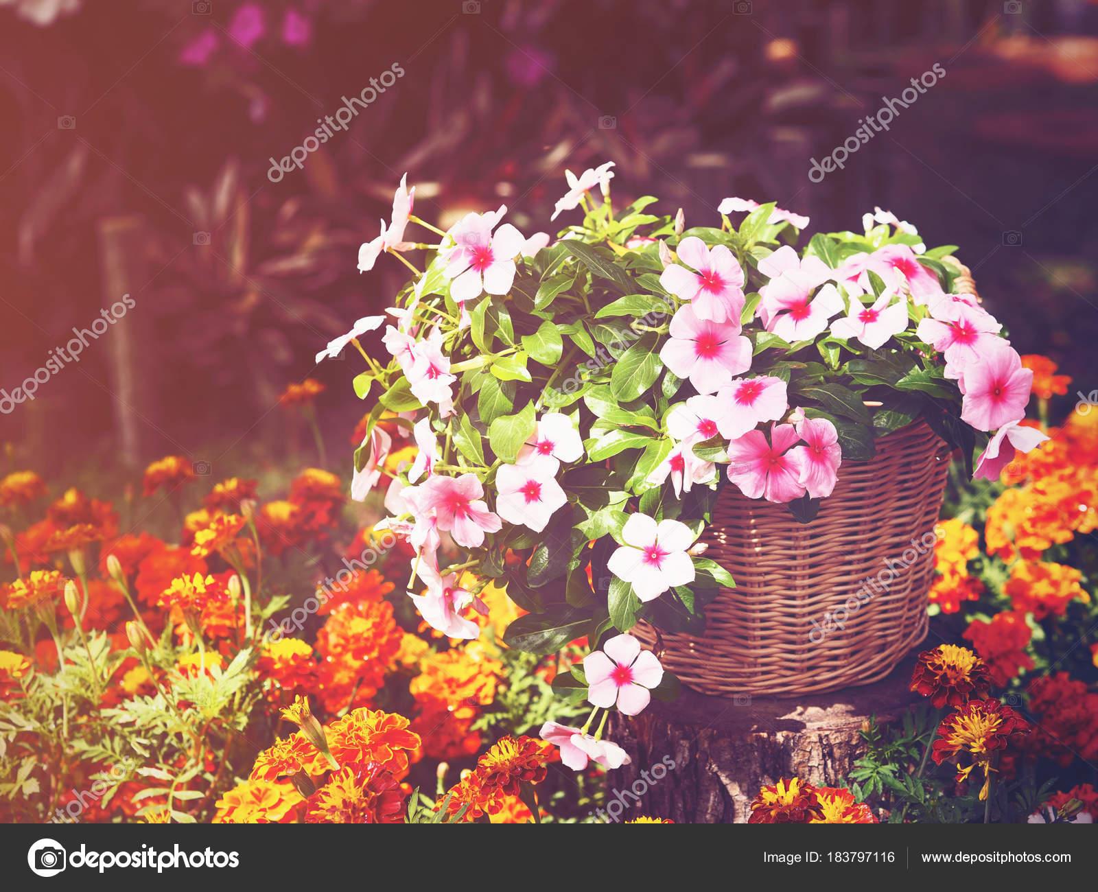 Rosa Und Weisse Immergrun Blumen Korb Fur Gartendekoration Vintage