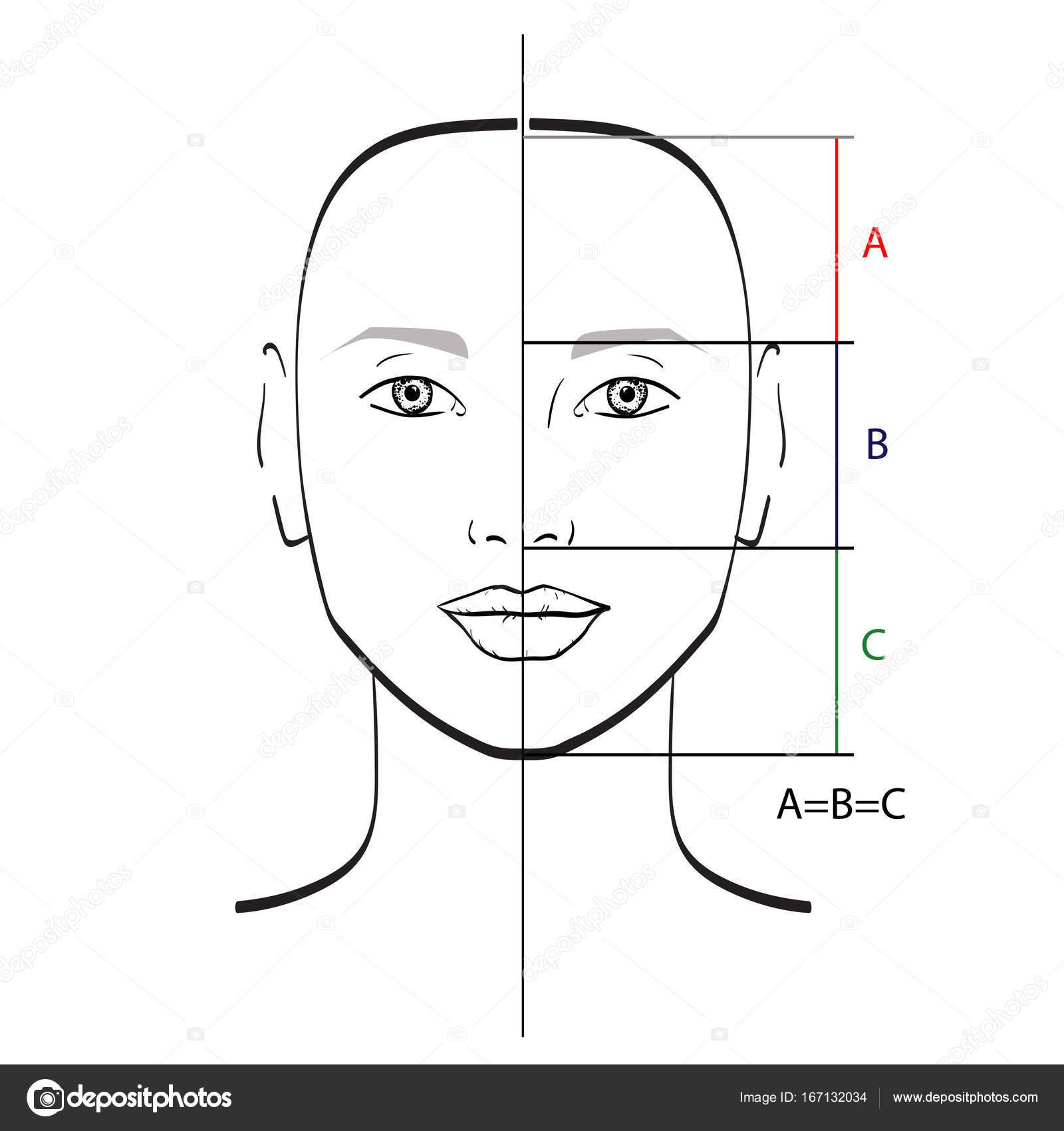 Совершенное Лицом Пропорции Шаблон Векторные Иллюстрации
