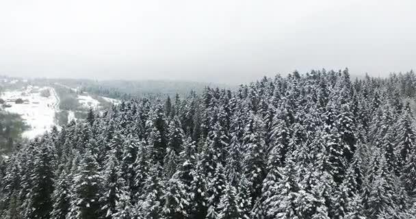 Letecký pohled. Zimní les v horách