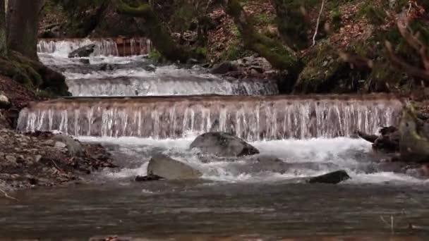 Jarní lesní proudu horská řeka běží kaskády přes kameny a mechem
