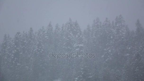 Blizzard v zimním lese s zasněžené borovice v pomalém pohybu