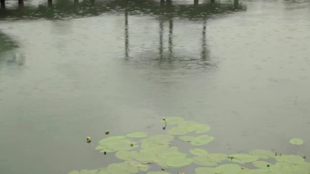 Regen fällt in Pool mit Seerosenblättern