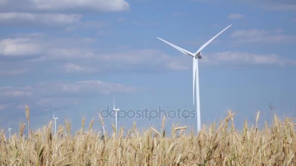 Otáčení větrné turbíny v oblasti zrání mladé pšenice