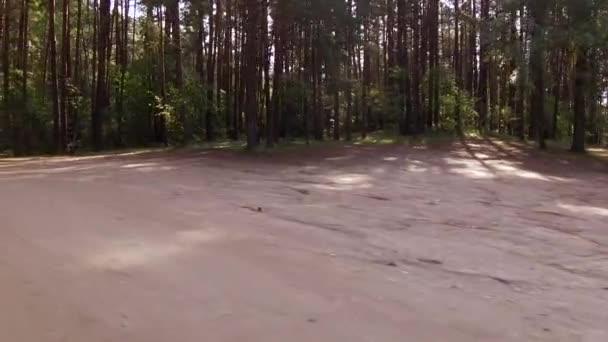 Chůzi na cestě přes krásný zelený Les listnatých stromů