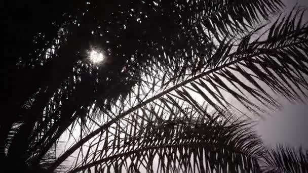 Listy z palmu houpat ve větru jasné světlo ze slunce svítí. Detailní záběr