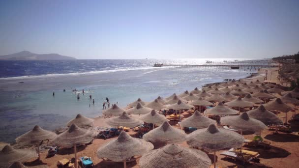 Persone in vacanza raccogliere conchiglie sulla spiaggia e prendere