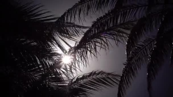 Leaves from a palm tree to sway in the wind a bright light from the sunset. Close up