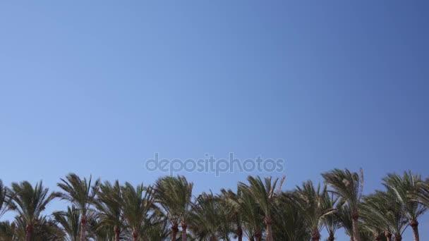 Vrcholky palem chvění od větru na obloze letět letadlem