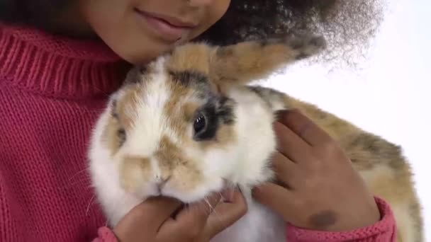 Little african curly girl is holding and stroking three colored rabbit at white background. Close up. Slow motion