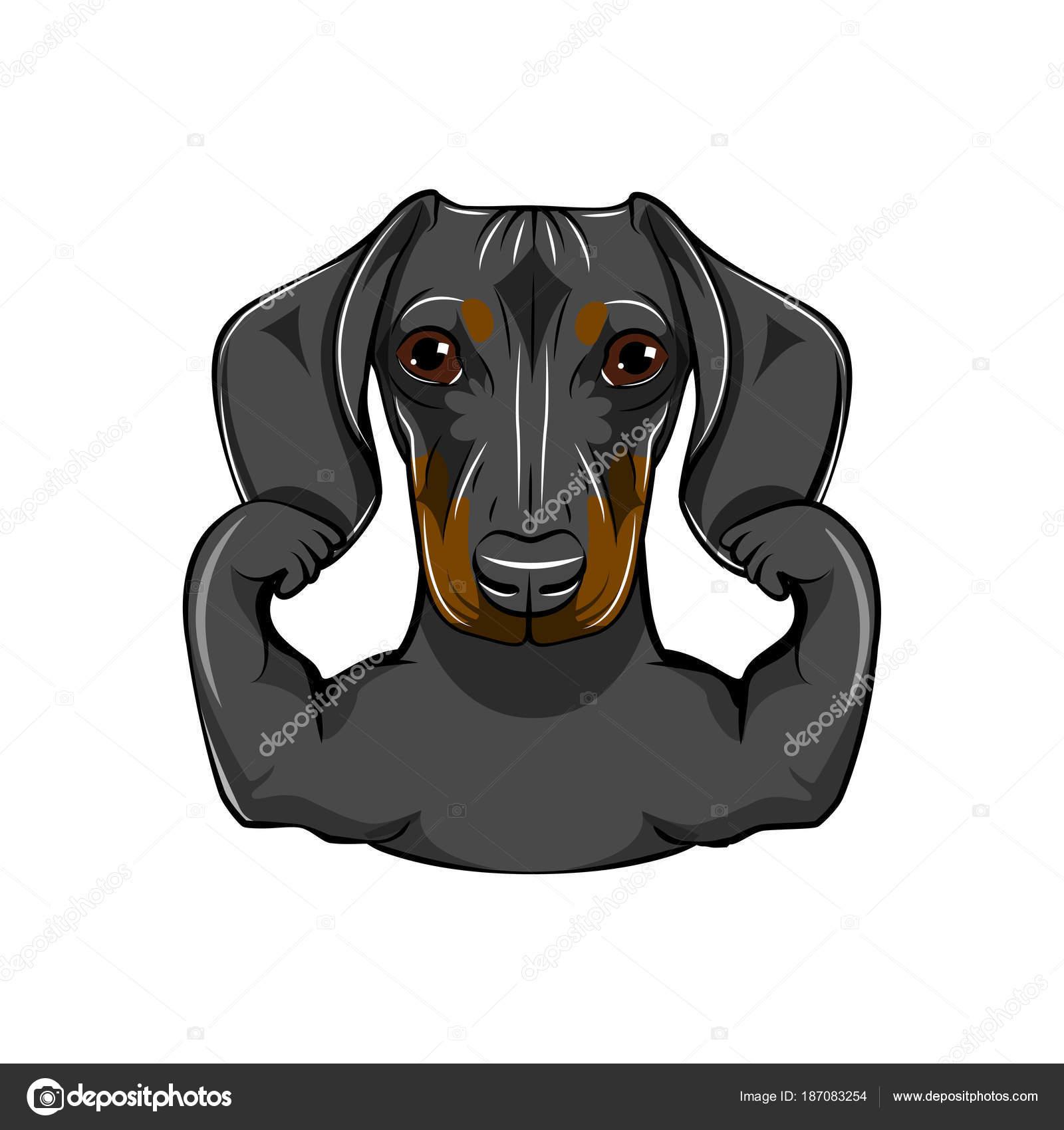Ritratto Di Cane Bassotto Con Muscules Illustrazione Di Vettore