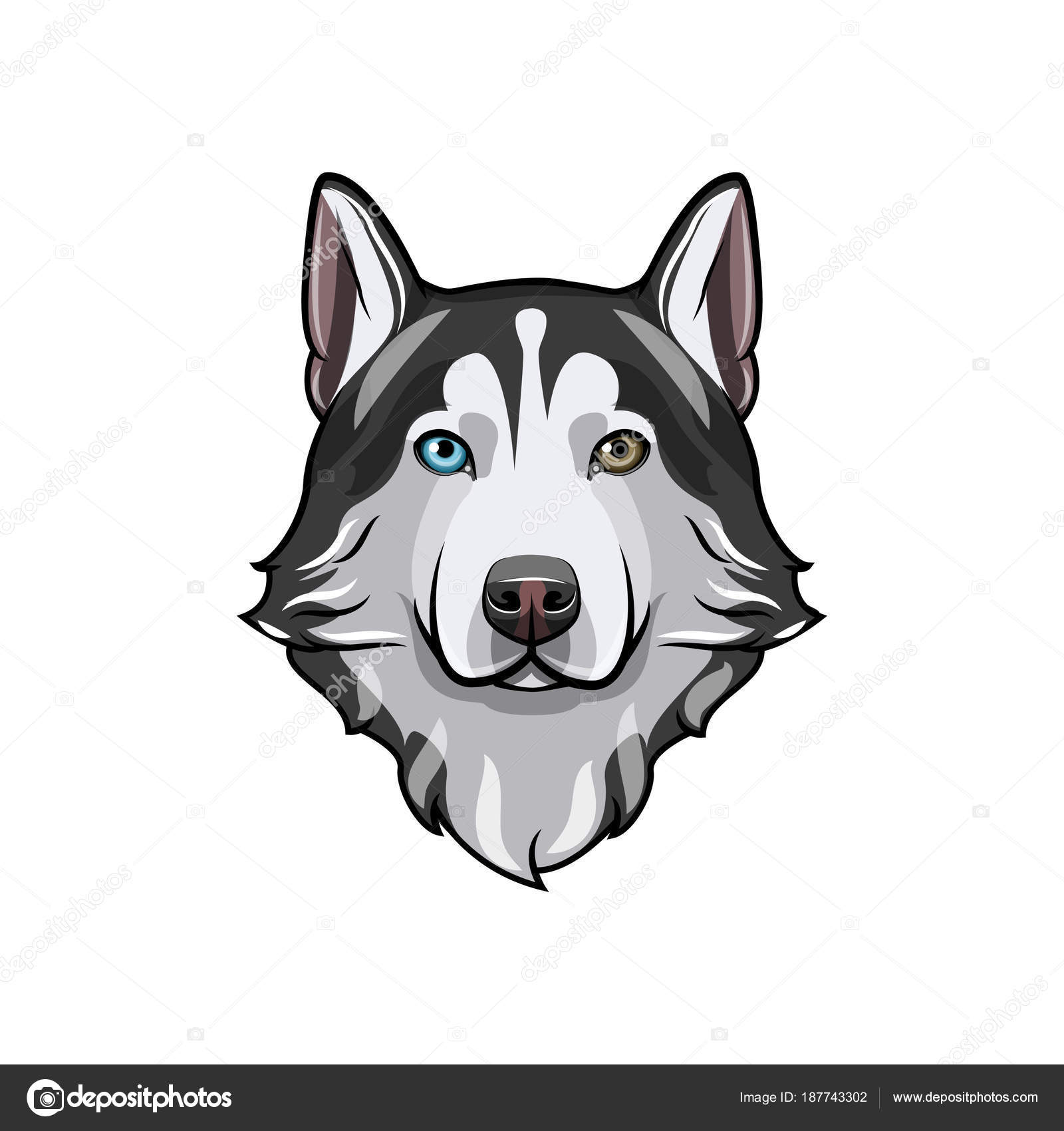 Bianco e nero husky siberiano con gli occhi multi colorati - Husky con occhi diversi ...