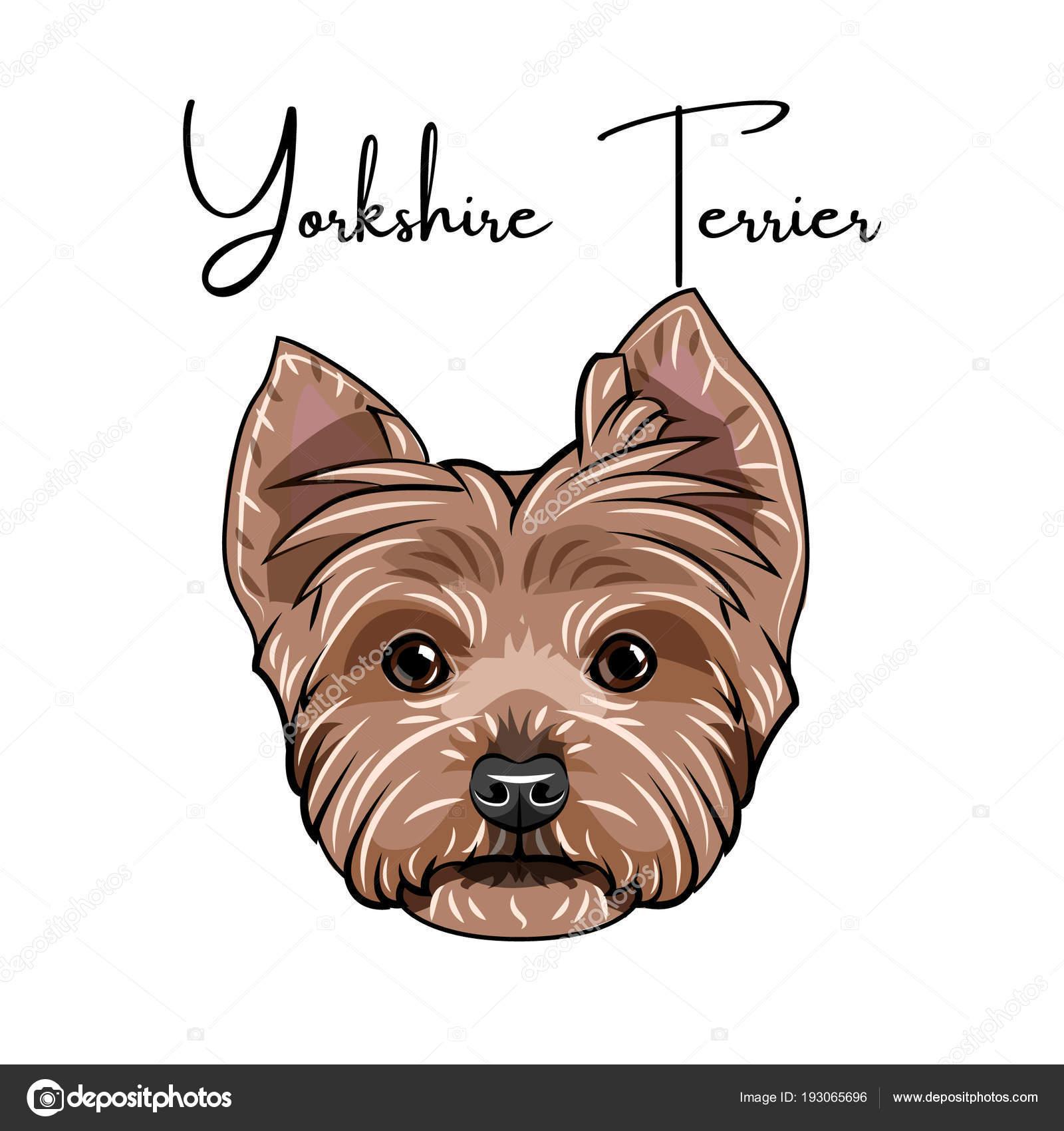 Yorkshire Terrier Portrait Dog Head Yorkshire Terrier Lettering
