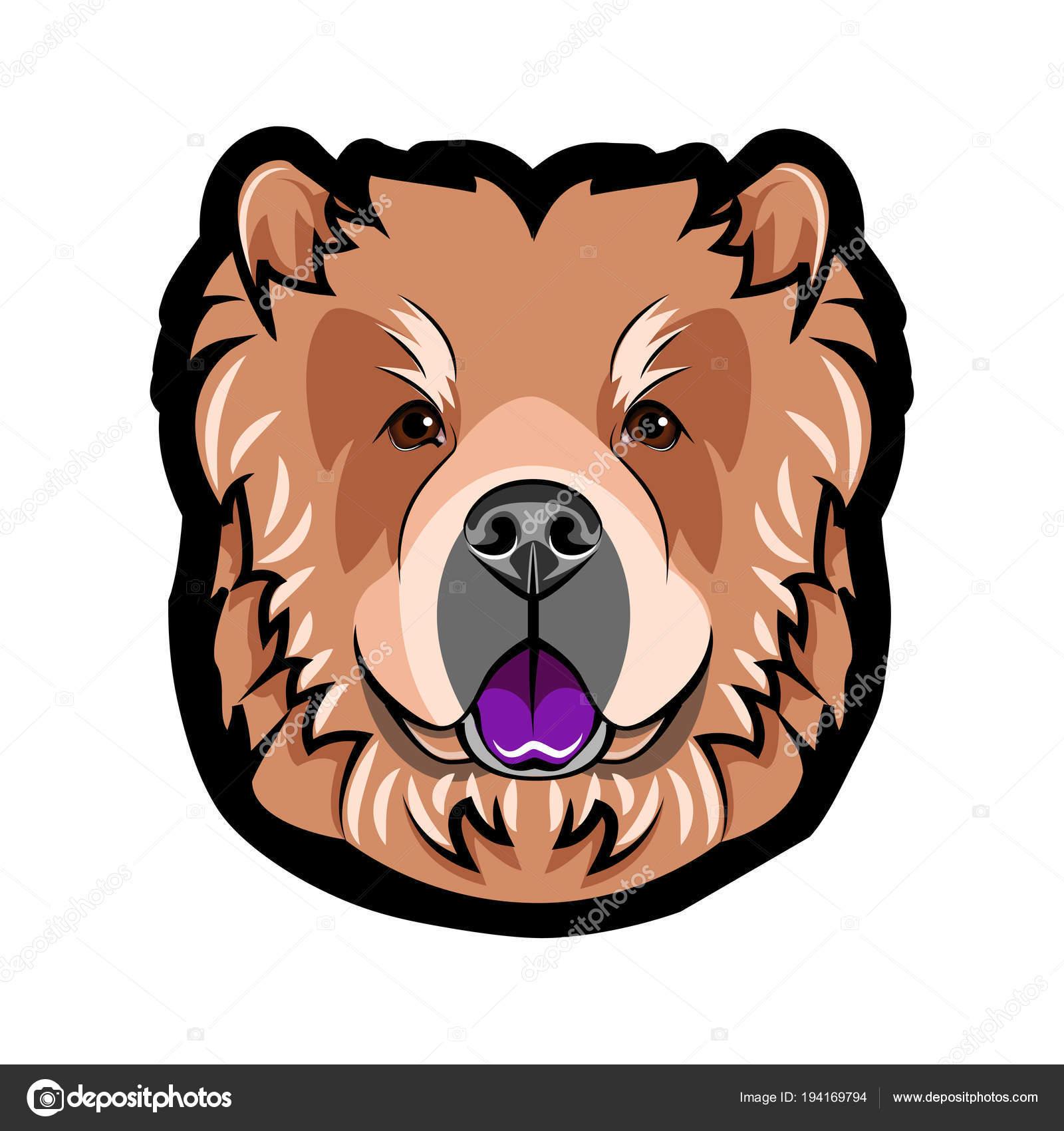 Chow Chow Dog Breed Dog Portrait Chow Chow Muzzle Face Head