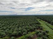 die Palmölplantagen von Sarawak, der Insel Borneo, Malaysia
