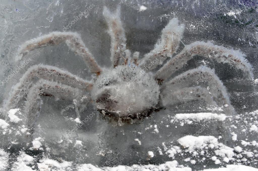 King crab in ice block