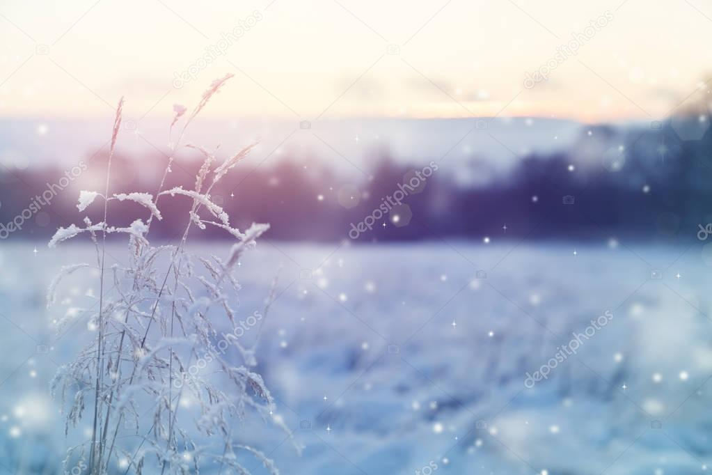 Beautiful winter background with flying snow. The setting sun