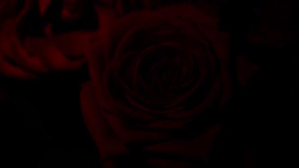 Vörös rózsa összetétele vízcseppek szerkesztésére és kísérletek