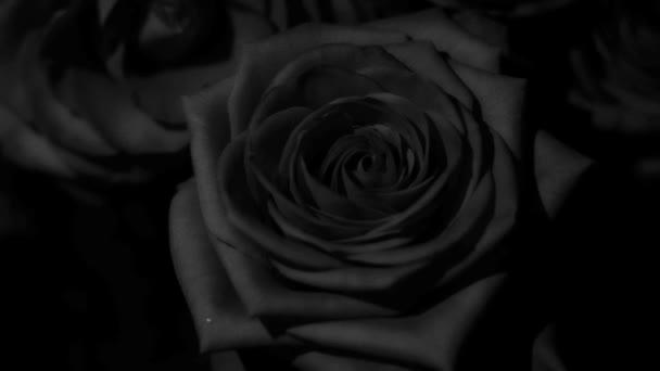 Černé a bílé růže s kapkami vody pro vaše experimenty a perfektní střih