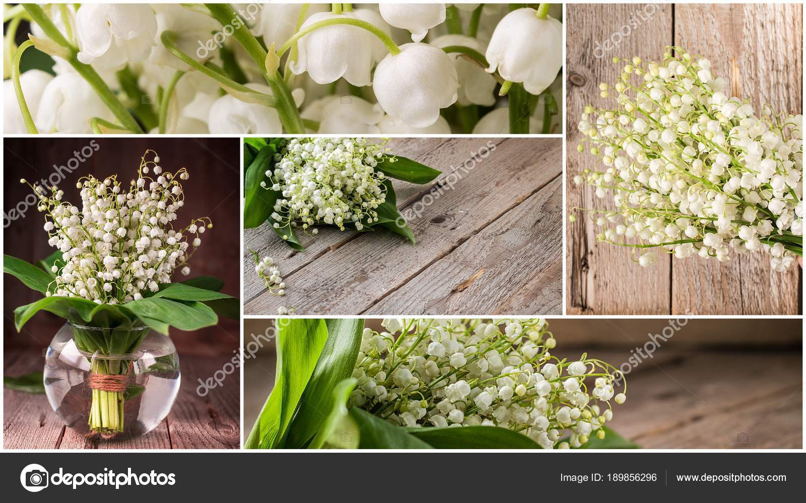 Collage of flowers lily of the valley stock photo mars58 189856296 collage of flowers lily of the valley stock photo izmirmasajfo Choice Image