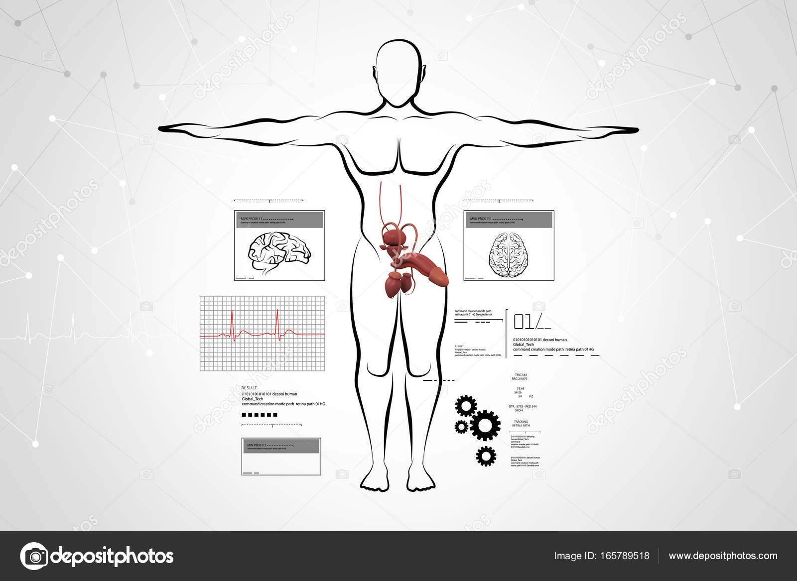 ilustração digital de corpo masculino sketch com sistema urinário ...