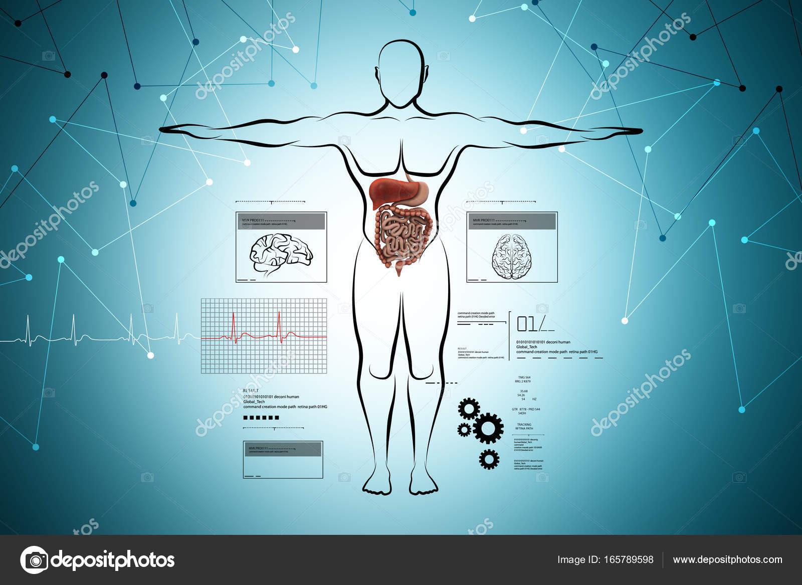 Charmant Markierte Diagramm Des Verdauungssystems Des Menschlichen ...