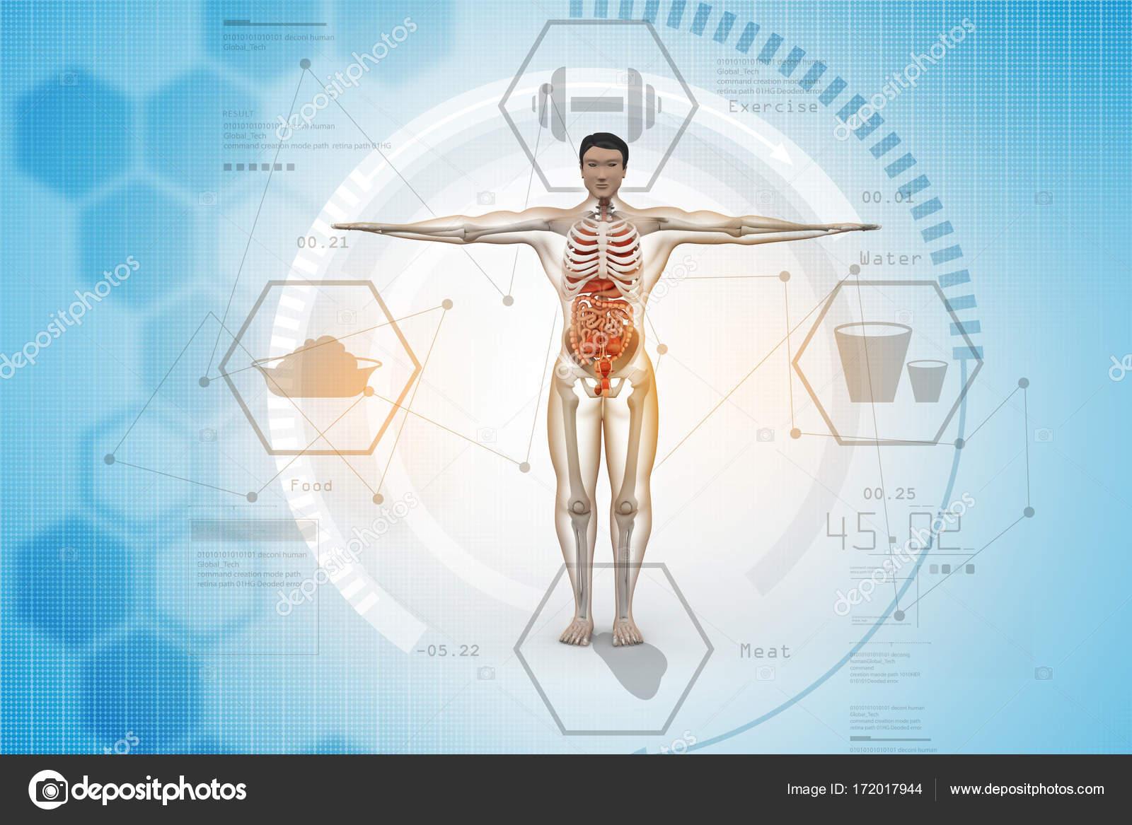 digitale Illustration der menschlichen Anatomie — Stockfoto ...