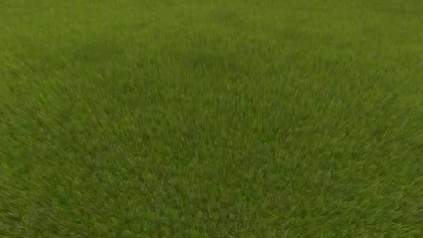 Flight over a green grassy field grass