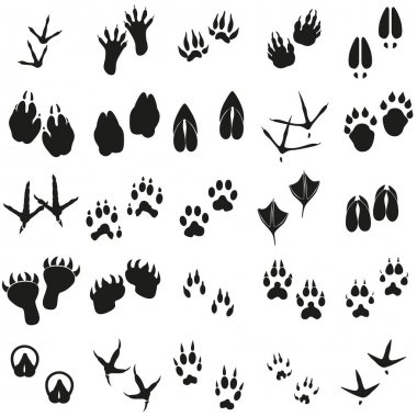 Silhouettes animal birds and mammals footprints set Vector icons.