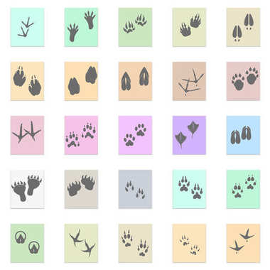 Silhouettes animal birds and mammals footprints set Vector black icon on color sticker