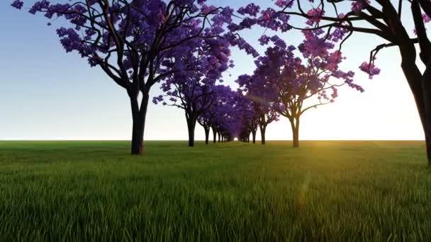 Růžový stromy při západu slunce
