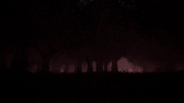 Gyönyörű kísérteties ködös erdő. Fenyőerdő. Természet háttér. Varázserő. Fantázia táj.