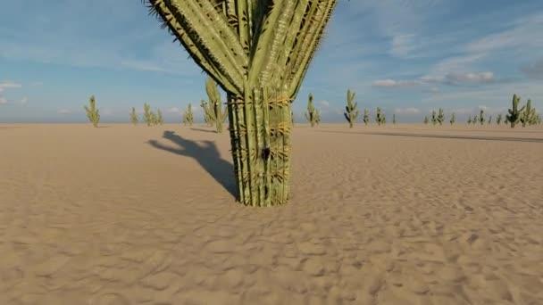 Kaktusz a sivatagban. Nyugati stílus. Párhuzamos talaj. Vad természet. Zöld Mexikói sivatag. Amerikai táj.