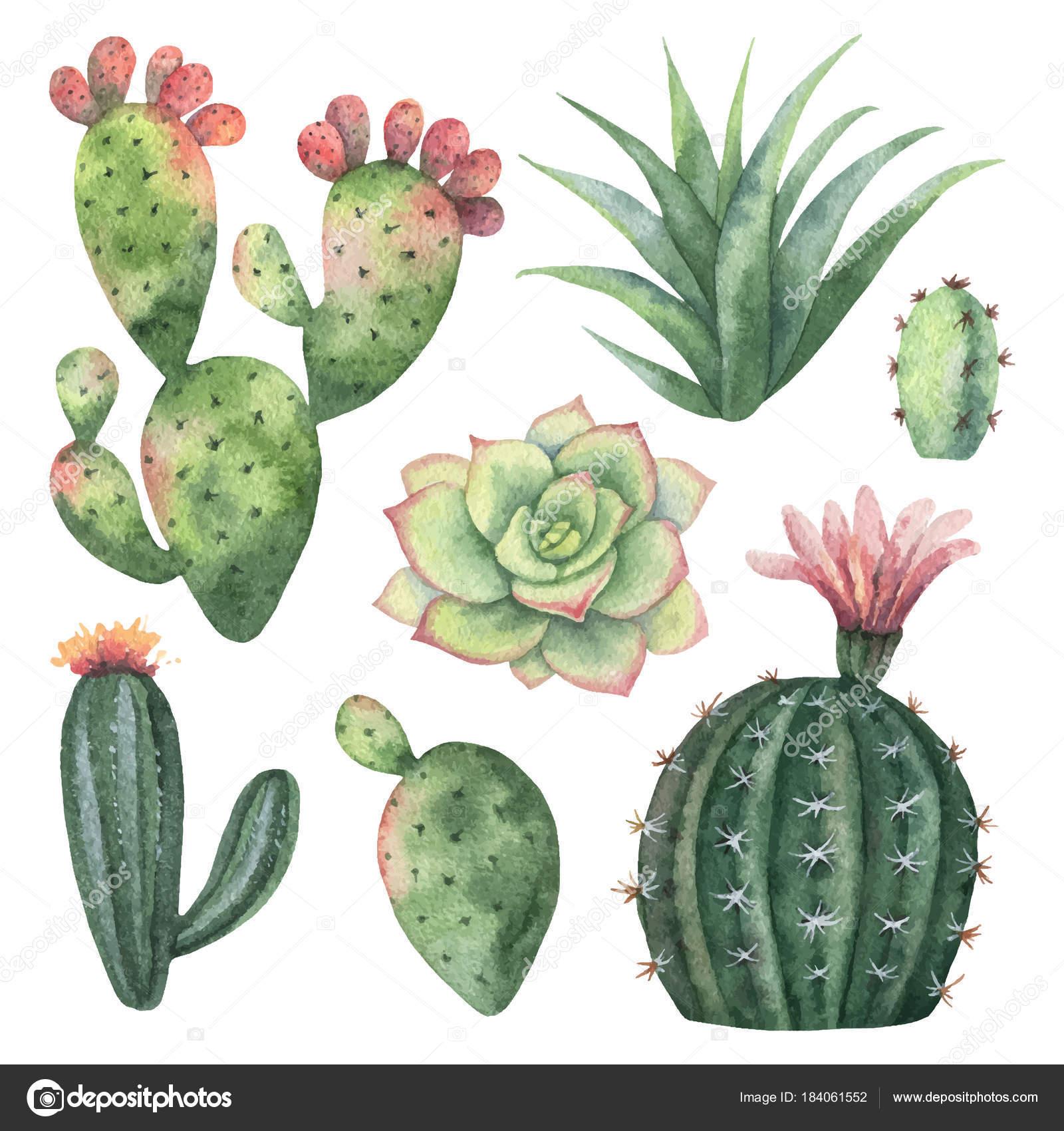 Conjunto De Vector De Acuarela De Cactus Y Plantas