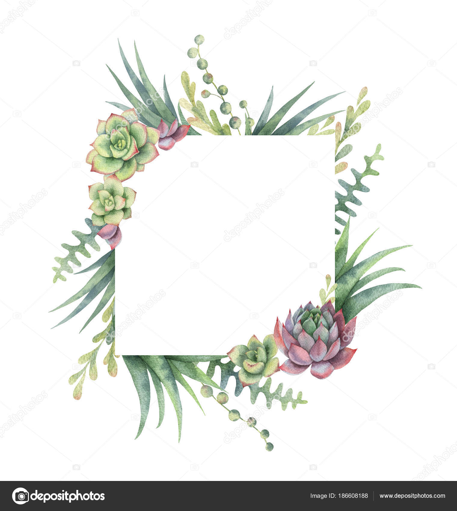 Watercolor frame of cacti and succulent plants isolated on white ...