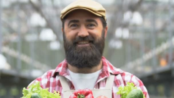 Vidám gazda bemutató doboz friss bio zöldségek, egészséges táplálkozás, élelmiszer
