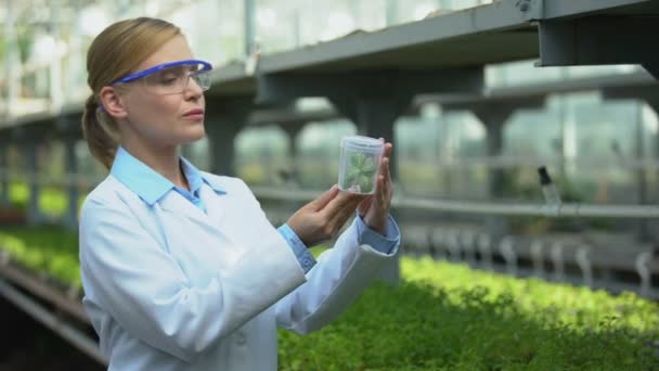 Forscherin betrachtet Pflanzenprobe und überprüft Ergebnisse von Züchtungsexperimenten